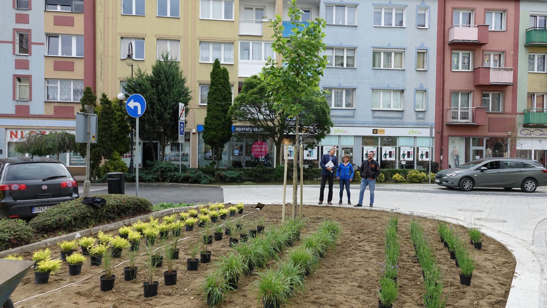 Kolejne rośliny w centrum
