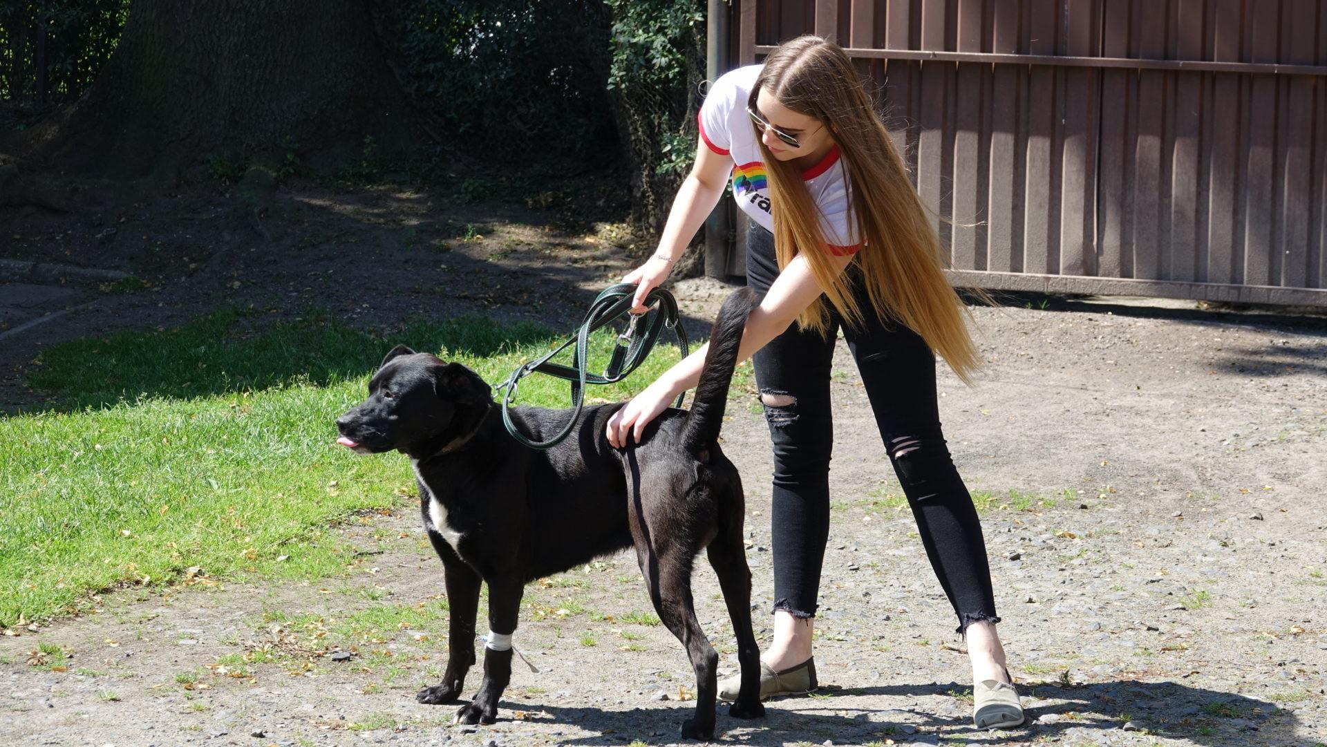 Uratowane z horroru psiaki szukają kochającego domu