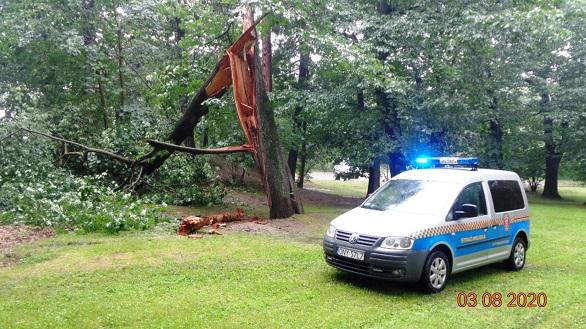Złamane drzewo w parku