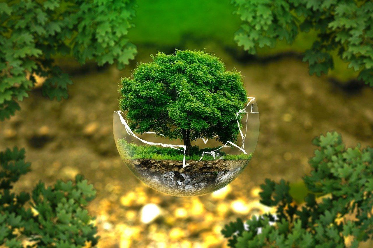grafika - ekologia