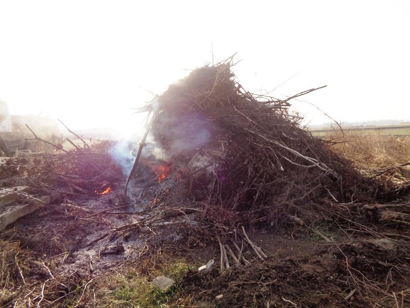 Chcieli spalić gałęzie…