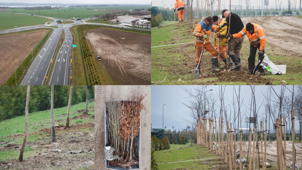 Bioagra rozpoczęła kolejne duże nasadzenia wokół zakładu