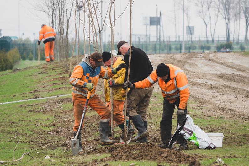akcja nasadzenia drzew