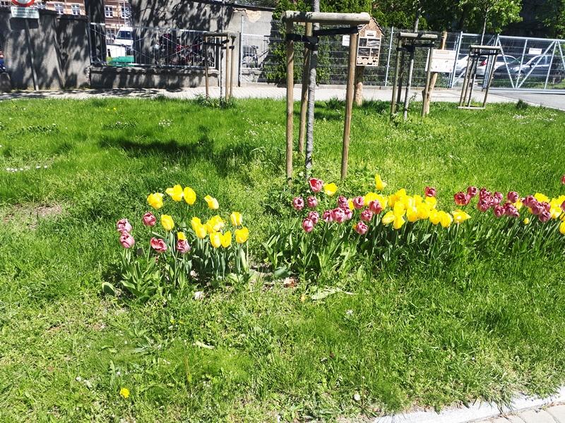Amator tulipanów.